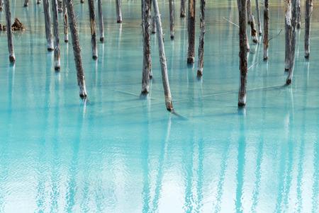 biei: Blue Pond (Aoiike) ,Biei Hokkaido Japan , April 2016 Stock Photo