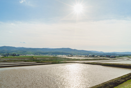 paddies: The sun and the rice paddies Stock Photo