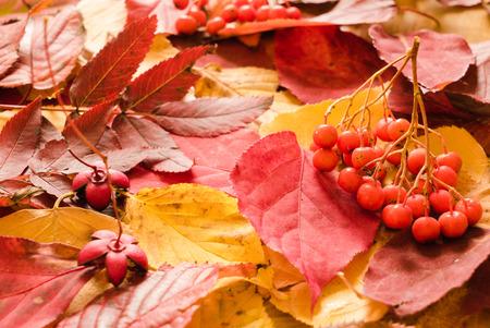 Colorful background of fallen autumn leaves Banco de Imagens