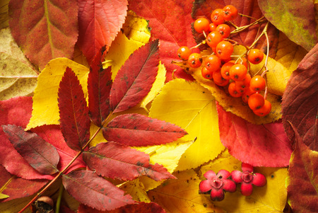 Colorful background of fallen autumn leaves Stock Photo