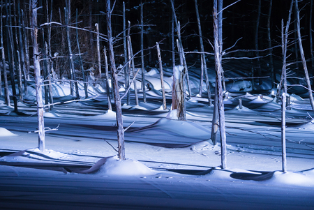 scenic spots: Blue pond illumination light up in winter night at Biei in Hokkaido, Japan. During the winter when the pond is frozen, it is lighting up at night