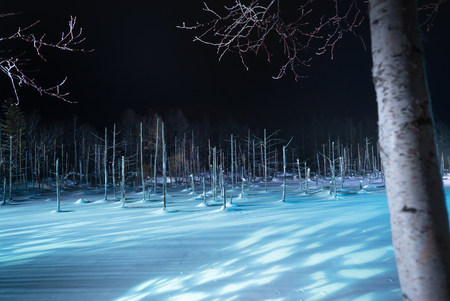 Blue pond illumination light up in winter night at Biei in Hokkaido, Japan. During the winter when the pond is frozen, it is lighting up at night.