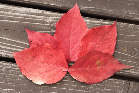 red background of fallen autumn leaves