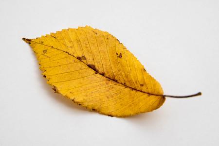 autumn yellow leafs on white background Banco de Imagens