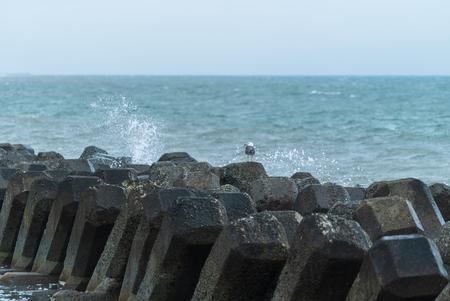 Seagull on the wave-block Banco de Imagens