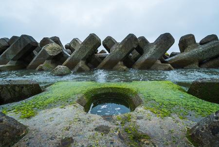 green algae blooms on concrete brock