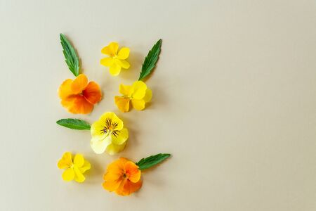 composition of yellow and orange pansy flowers or violets on beige paper background with copy space Banque d'images