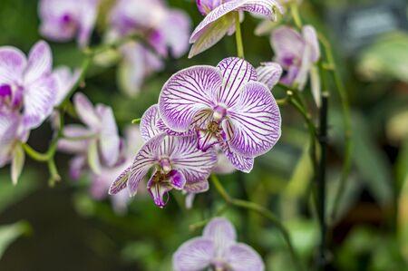 blooming pink orchid Zdjęcie Seryjne