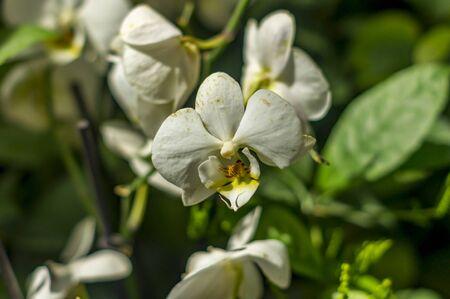 blooming white orchid Zdjęcie Seryjne