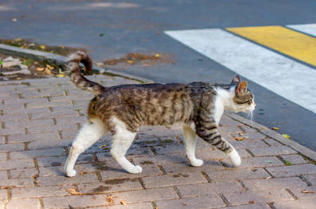 wild cat is going to cross the road 写真素材 - 150639938