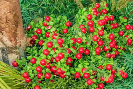 artificial cranberry decorative background