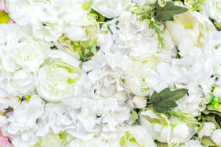 artificial blooming peonies of white color background Imagens
