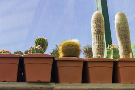 different sorts of cactuses in pots on window sill