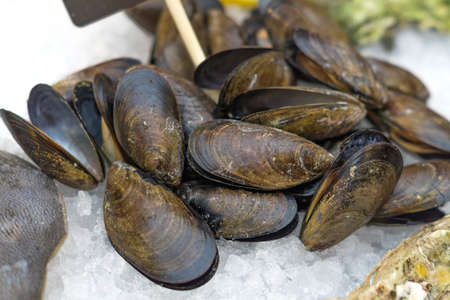 Fresh seafood - mussels in shell on ice in the market.