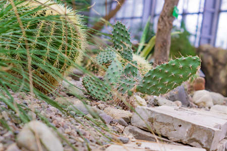 Various cacti and succulents in the green house Foto de archivo