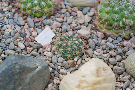 close up of succulent plants among stones in botnical garden