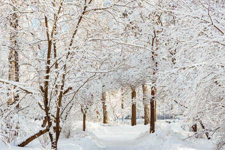 Frossty winter landscape. Trees in snow in the park