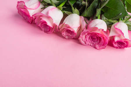 Pink blooming roses on pastel pink background. Romantic floral frame. Copy space Stockfoto