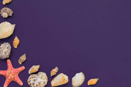 Sea shells and starfish on violet background with copy space. summer holiday and vacation concept