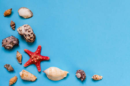 Sea shells and starfish on light blue background with copy space. summer holiday and vacation concept