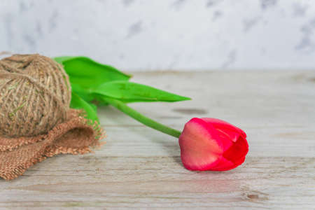 Fresh beautiful pink tulip with a rope on a wooden background with copy space.