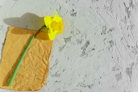 Yellow blooming narcissus flower on craft paper and gray background. Copy space.