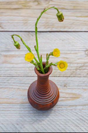 Freshly cut yellow coltsfoot flowers in clay vase on wooden table outdoors. Rustic style. Stock fotó - 152485693