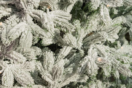 texture background of a snowee furry tree branches for a Christmas card