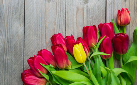 Festive greeting card with bouquet of blooming red tulips. Spring background with copy space