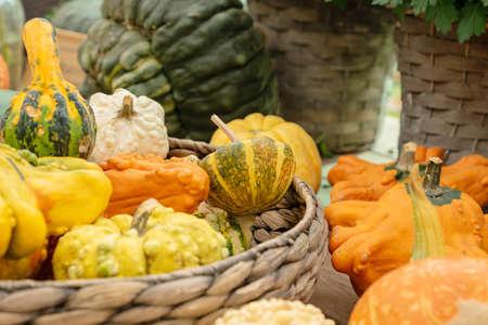 Autumn pumpkin background. Close up of mini pumpkins at farmers market. Banque d'images