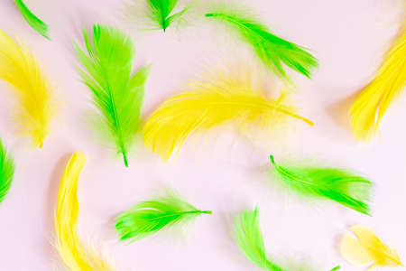 Trendy frame with Beautiful green and yellow bird feathers on pink pastel background. Flat lay with copy space
