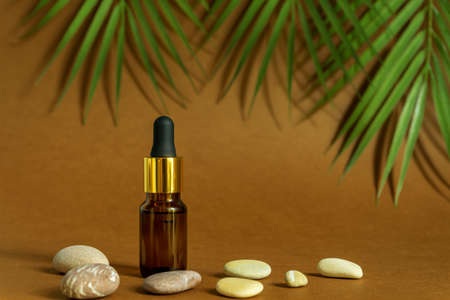 Dropper dark glass bottle with pipette or droplet. Mock up Essential liquid .Trendy background tropical leaves and sea stones