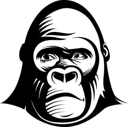 gazing: Gorilla head.  illustration in the engraving manner. Picture can be used for symbols and labels design, and also for print on t-shirts.
