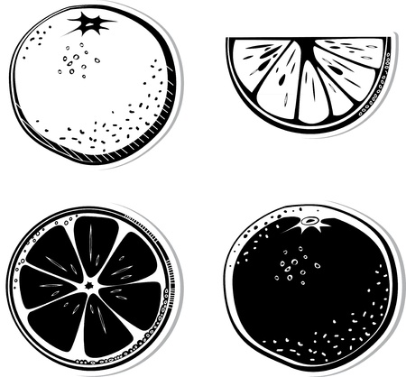 Set of decorative oranges. Black and white decorative illustration for graphic design