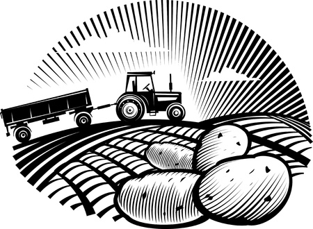 manner: Potato against farm tractor in a field. illustration in the engraving manner. Picture can be used for labels design