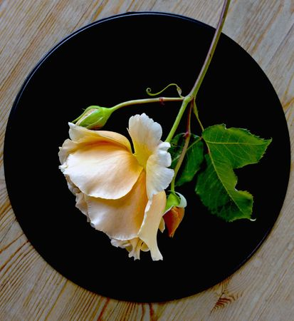 Magnificent rose of yellow colour on a black brilliant metal tray