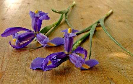 Blossoming lilac irises on a wooden table