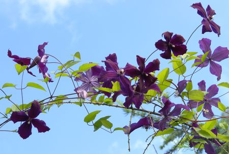 Blossoming branch in lilac tones