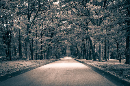 non marking: a straight forest road, sub beaming through the trees in black and white