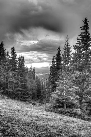 米国コロラド州の山に常緑の松の木 写真素材