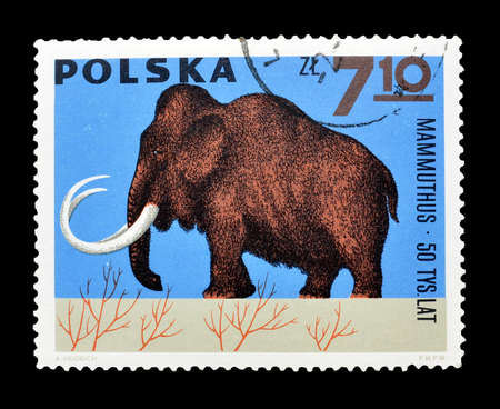 philately: Cancelled postage stamp printed by Poland, that shows Mammoth, circa 1965. Editorial