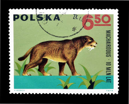 philately: Cancelled postage stamp printed by Poland, that shows Machariodus, circa 1965.