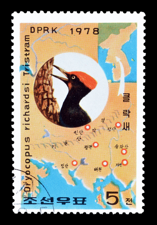 pecker: Cancelled postage stamp printed by North Korea, that shows White bellied black wood pecker, circa 1978.