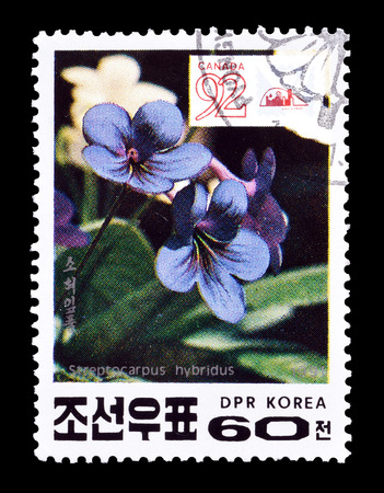 post stamp: Cancelled postage stamp printed by North Korea, that shows Cape Primrose flower, circa 1991.