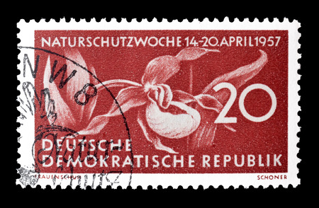 ladys: Cancelled postage stamp printed by German Democratic Republic, that shows  ladys slipper flower, circa 1957. Editorial