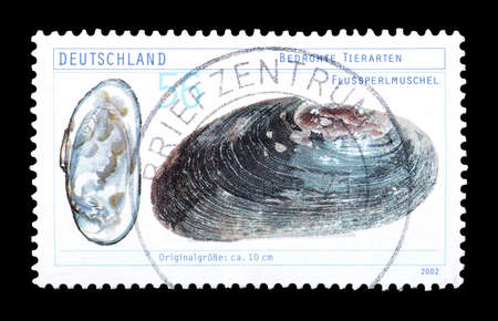 freshwater pearl: Cancelled postage stamp printed by Germany, that shows Freshwater Pearl Mussel, circa 2002. Editorial