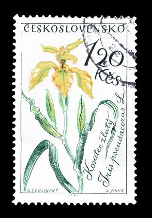 czechoslovakia: Cancelled postage stamp printed by Czechoslovakia, that shows Yellow iris, circa 1964.