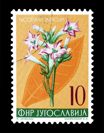 post stamp: Cancelled postage stamp printed by Yugoslavia, that shows Tobacco flower, circa 1955.