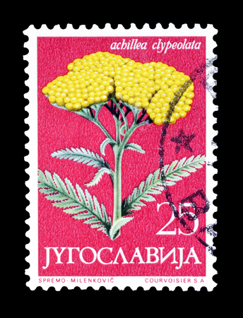 moonshine: Cancelled postage stamp printed by Yugoslavia, that shows Moonshine yarrow flower, circa 1958. Editorial