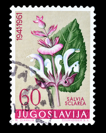 philately: Cancelled postage stamp printed by Yugoslavia, that shows Clary flower, circa 1961.